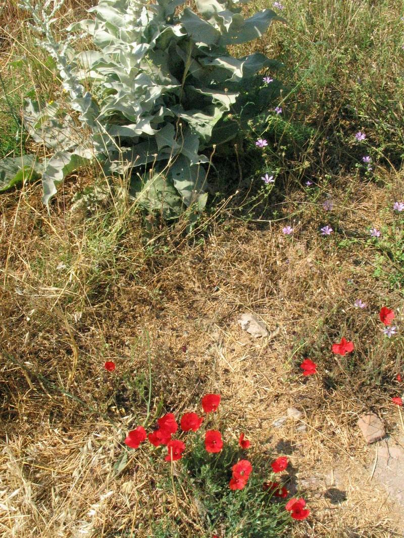 Ephesus_and_selcuk_078