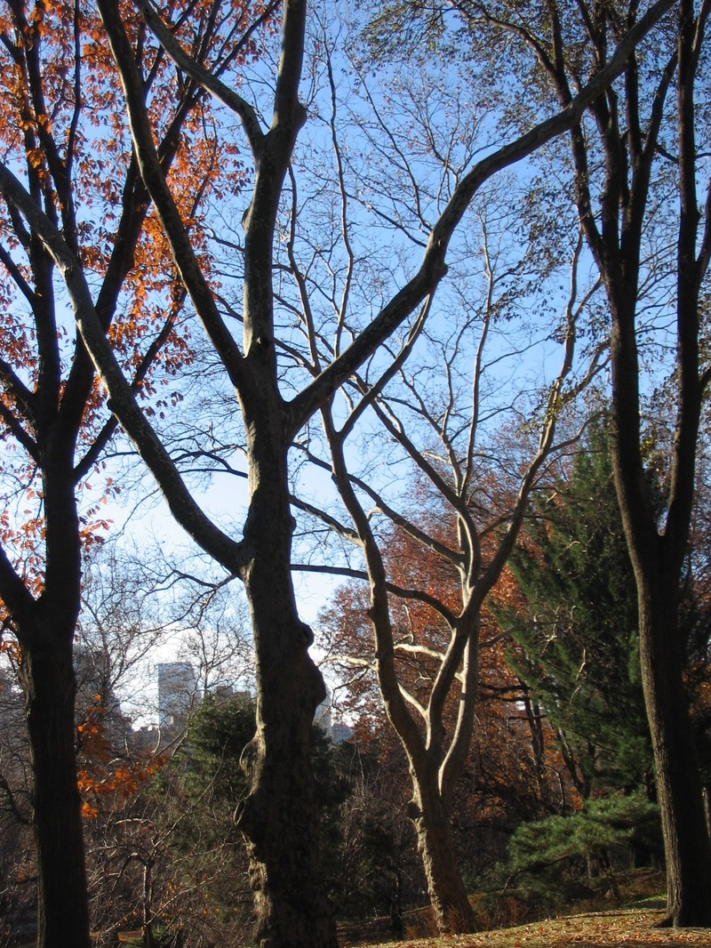 Late_fall_walk_in_central_park_024