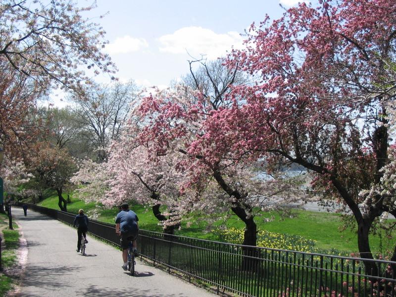 Spring_in_riverside_park_006
