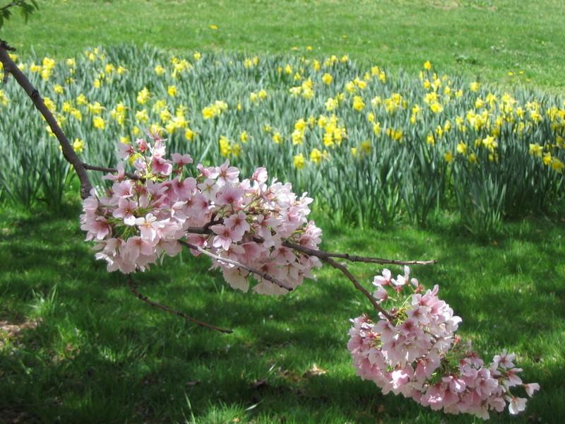 Spring_in_riverside_park_014